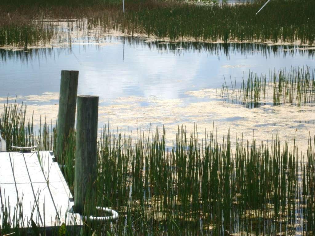 Chapel Trail Nature Preserve
