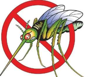 No More Mosquitos
