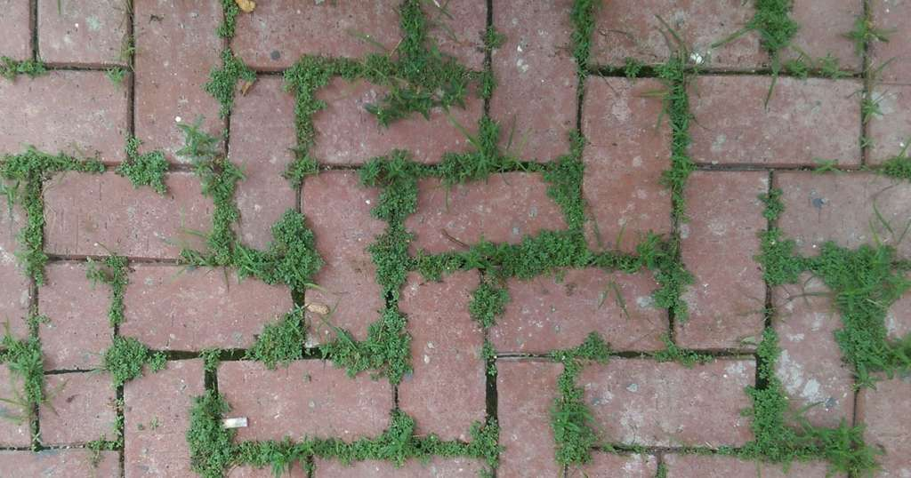 Weeds in Pavers